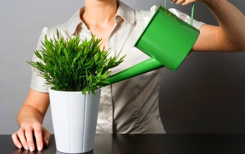поливать комнатные цветы йодом