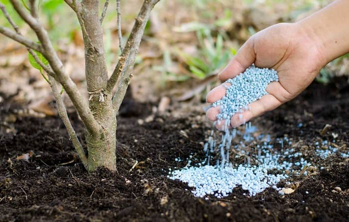 удобрения для плодовых деревьев
